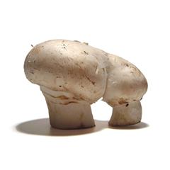 mutatos: mushroom