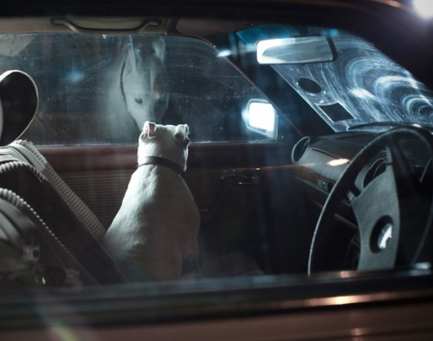 Mute: the silence of dogs in cars - Bones