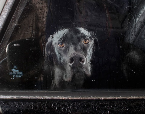 Mute: the silence of dogs in cars - Prospero