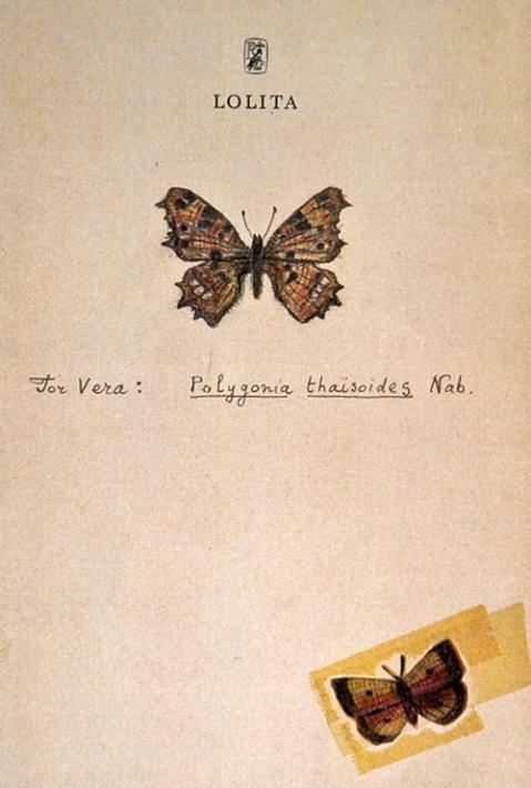 Lolita butterflies